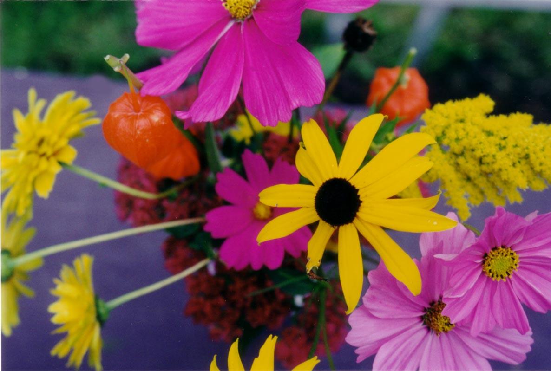 Le fond de fleurs for Cochonnet fenetre