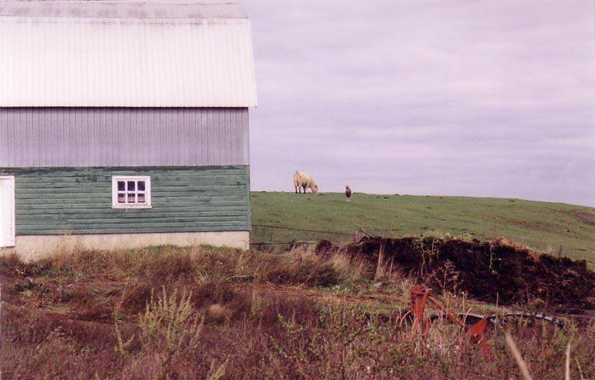 La vache la ferme for Cochonnet fenetre
